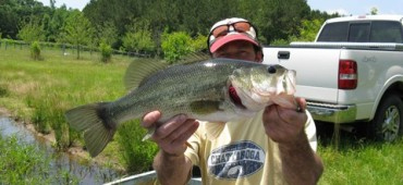 Largemouth Bass-Consulting